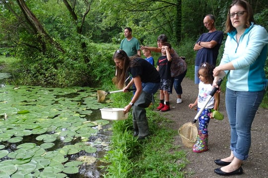 Participants in a pond life program at Lowe-Volk Park in Crestline on Monday evening search the park's pond.