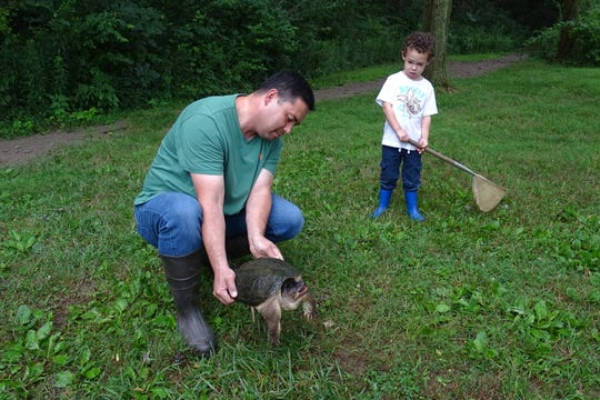 Jack Roller, 5, watches warily as his dad, David Roller, holds a snapping turtle during a pond life program at Lowe-Volk Park in Crestline on Monday evening.