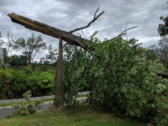 A downed tree in Buccleuch Park in New Brunswick after Monday's storm.