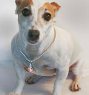 Evelyn Kuhlman's dog, Lucy, helps to model jewelry.