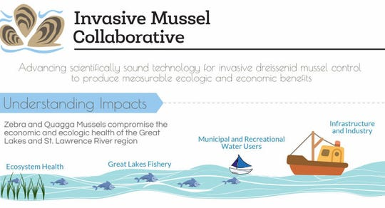 Three organizations say they're relying on an intergovernmental body to develop solutions to problems caused by invasive mussels in the Great Lakes.