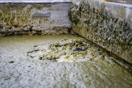 The algae infected water is filled with millions of tinny bubbles. Those bubbles carry the algae to the top of the water and then it is skimmed off the top. That live algae can then be turned into fuel, plastic, styrofoam and other products.  An almost clean water is returned to the lake. According to the Engineer Research and Development Center (ERDC) of the U.S. Army Corps of Engineers, they are conducting a research project called Harmful Algal Bloom Interception, Treatment, and Transformation System (HABITATS) in Moore Haven, Florida. The research is being done in collaboration with AECOM and Pacific Northwest National Laboratories. An overview of the research program and pilot demonstrations of the interception and treatment technologies were given, Tuesday afternoon, July 23, 2019. The site is located immediately northeast of the Moore Haven Lock and Dam, in Alvin Ward Park, Moore Haven, Florida. The hope is to start pulling harmful algae from the water before it's released into the rivers.