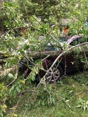 Trees crushed three guest's cars at East Shorewood Cottages during the weekend's storms.