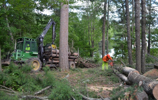 Employees of a logging company cut and remove wood from near the shore of Bear Paw Lake at Bear Paw Boy Scout Camp near Mountain on Monday, July 22.