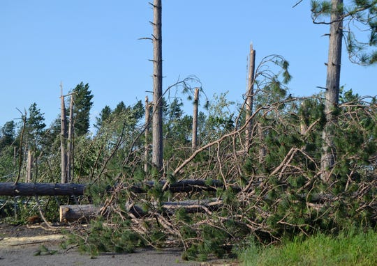 Trees along Highway 32 near Twin Pines Road in the town of Townsend were snapped off during the storm on Friday, July 19.