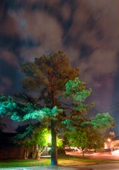 "In this April 20, 2010, file photo, clouds surround the ""Moon Tree,"" a loblolly pine propagated from a seed that orbited the moon with Apollo 14 astronauts in 1971, and is now a stately tree growing in the Athens-Clarke County Planning Department parking lot in Athens, Ga. Five trees planted in New Mexico from seeds taken to the moon during the Apollo 14 and given to the state by NASA have all died or been forgotten, according to officials at the locations where the trees were planted decades ago."