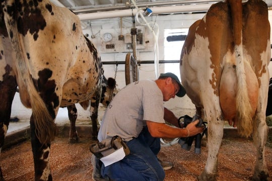 Steven Vincent milks the cows at Brookby Farm in Dover Plains on July 11, 2019.