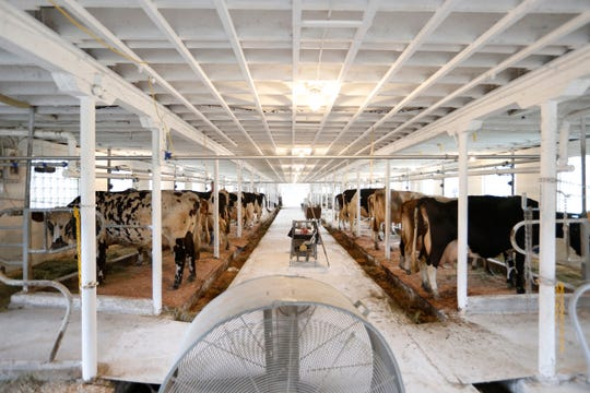 Milking time at Brookby Farm in Dover Plains on July 11, 2019.
