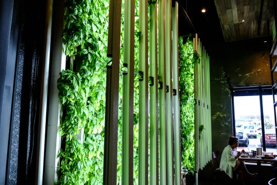 Visit Two Meatballs in Long Neck and you'll be greeted by a giant basil wall.