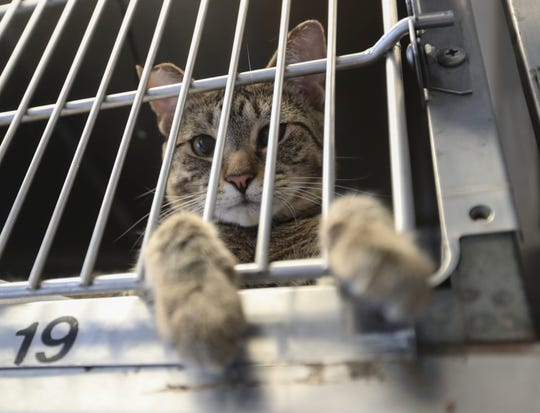 Mowbli looks out of his cage, waiting to be adopted at Hi Tor Animal Care Center in Pomona on Tuesday, July 23, 2019.