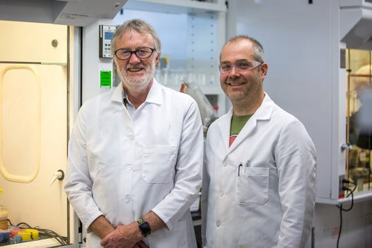 A team led by John Ralph (left), a professor of biochemistry at the University of Wisconsin–Madison, and research scientist Steve Karlen has been awarded a patent for a method to synthesize acetaminophen—the active ingredient in Tylenol—from a natural compound derived from plant material.