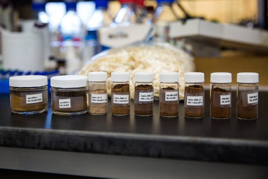 A team led by John Ralph, a professor of biochemistry at the University of Wisconsin–Madison, has been awarded a patent for a method to synthesize acetaminophen—the active ingredient in Tylenol—from lignin. Pictured here are lignin samples in Ralph's lab at the Wisconsin Energy Institute building in Madison, Wis., Thursday, June 27, 2019.