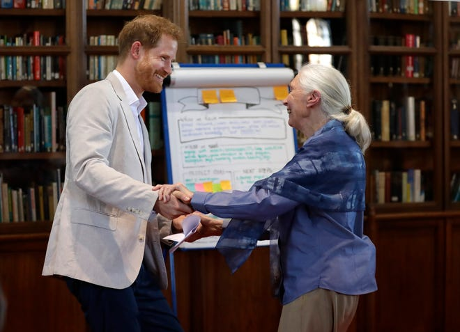 Prince Harry and Dr Jane Goodall dance as he attends her Roots & Shoots Global Leadership Meeting at St. George's House, Windsor Castle, July 23, 2019.
