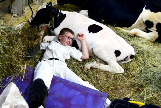 William Whittemore, of Candor, rests on his cows Wednesday during the Tioga County Fair in Owego on Aug. 8, 2018.