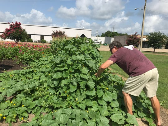Mark Shapley gathers the bounty of the garden he created in front of MM Shapley's Restaurant in Ridgeland.