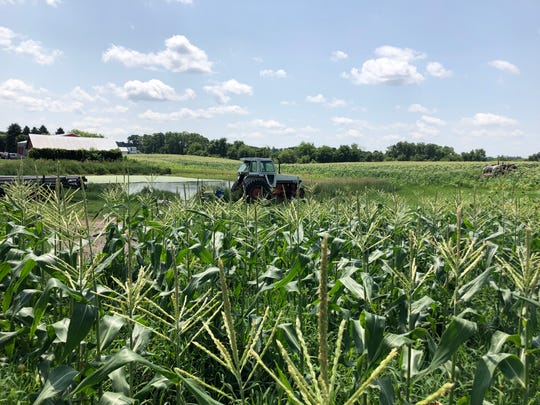 Twenty acres of sweet corn at Poulson Farm in Palmrya will be hand picked and delivered fresh to the State Fair, with profits shared with the volunteers who work the New Berlin Lions Club corn roast stand.