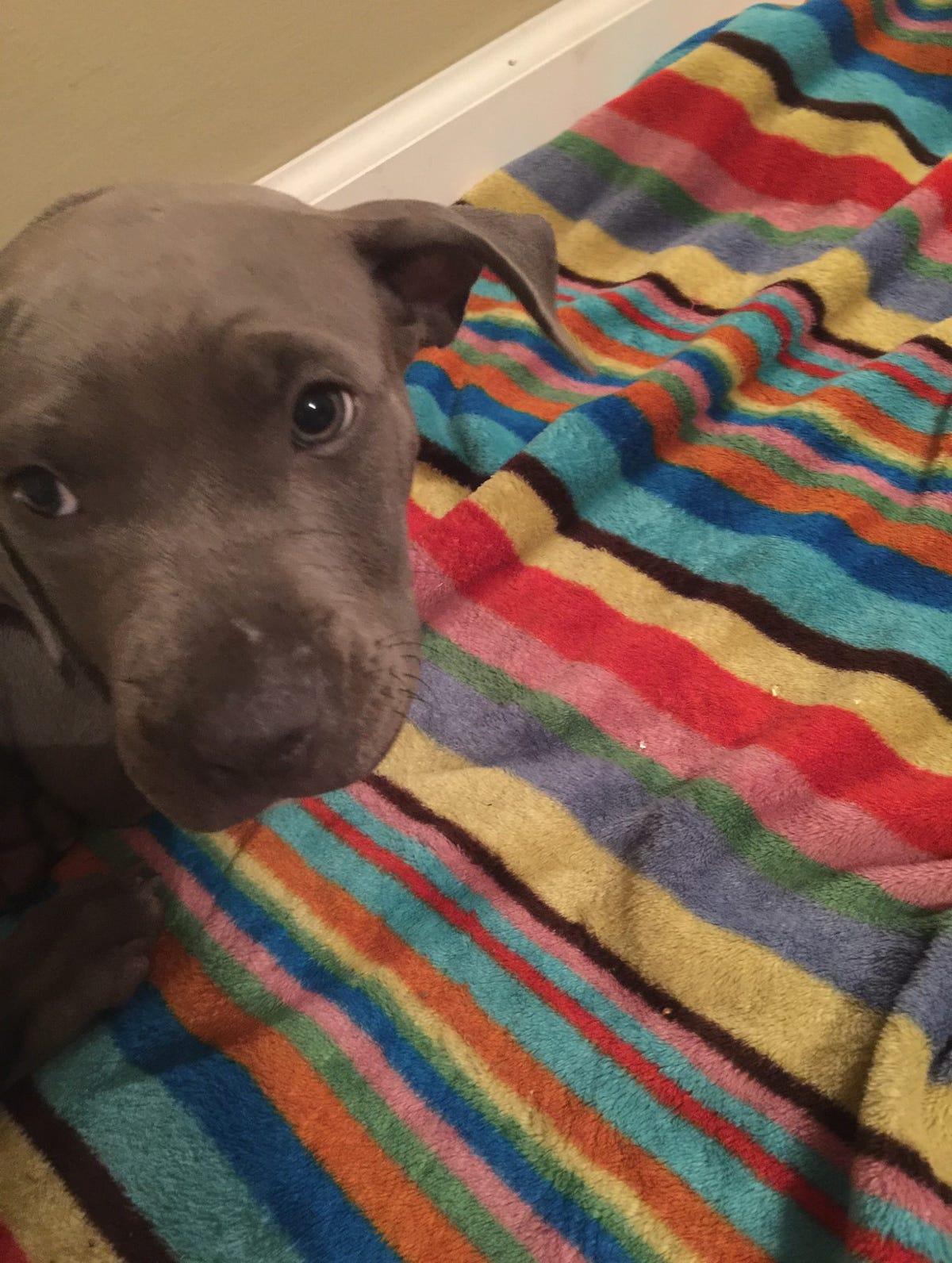 Alabama Humane Society animal shelter kills family dog in