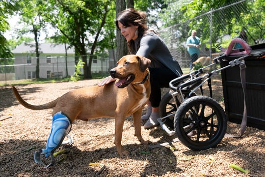 Lieutenant Dan, a dog at the Nashville Humane Association, shows off his prosthetic legs while being pet by executive director Laura Chavarria on Friday.