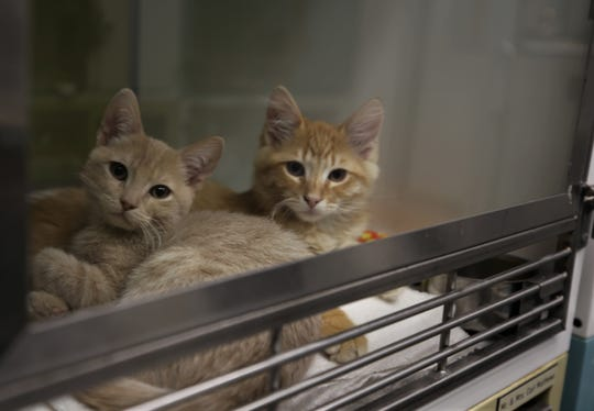 Simba and Kane wait for adopters, Wednesday, July 24, 2019, at Farmington Regional Animal Shelter.