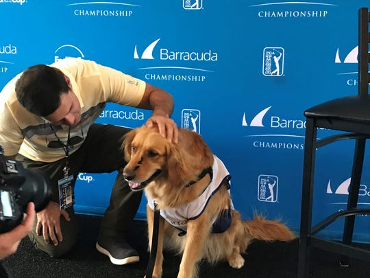 Judge, A golden retriever with a mark on his nose, is at Montreux as a support dog.