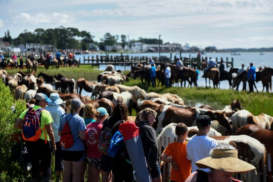 Crowds waded through water, trekked across muck, hung in trees and clung to docks just to get a good view of the Pony Swim on Chincoteague Island, Virginia, on July 24, 2019.