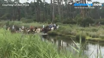 In video provided by Ken Price, ponies are lead across Assateague Island before their annual swim across the channel to Chincoteague Island.