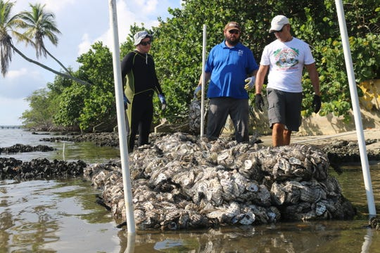 Arthur Gardineer, left, Dr. Glenn Coldren and Rick Posatiere place bagged oyster shells to a living shoreline site that new baby oysters will eventually call home.