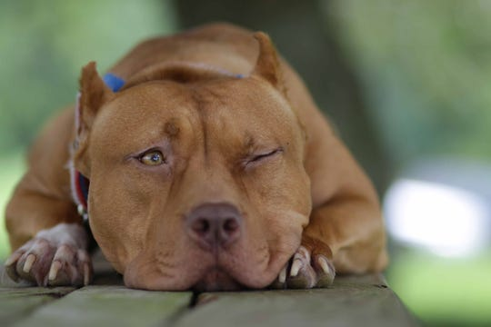 Fairfield is overhauling its dog ordinance and one change may allow pit bull dogs in the city.