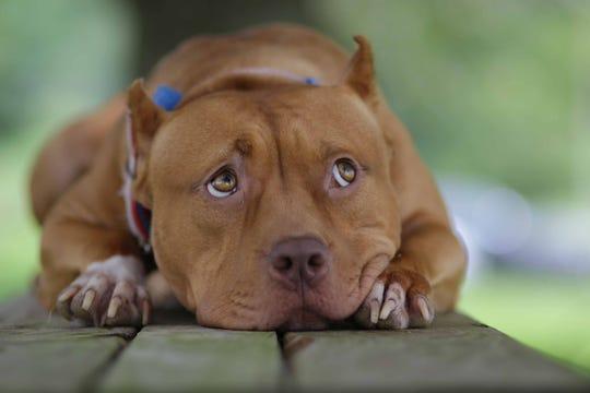 wounding dog brandy morace - 540×360