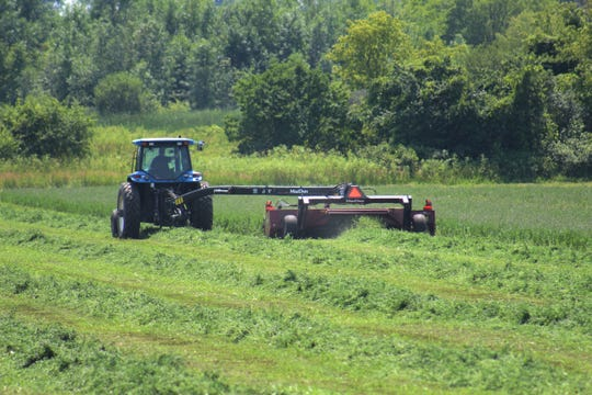 Many folks are already considering a late cutting of alfalfa this year due to the many challenges faced during the 2019 forage season.