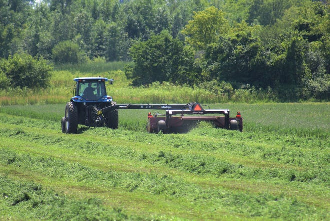 Many folks are already considering a late cutting of alfalfathis year due to the many challenges faced during the 2019 forage season.
