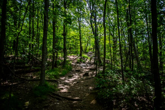 "This trail seen July 25, 2019, on Mount Philo is not an official trail, it's one humans have created which is part of the ""intensive use"" State Parks Director Craig Whipple is trying to combat."