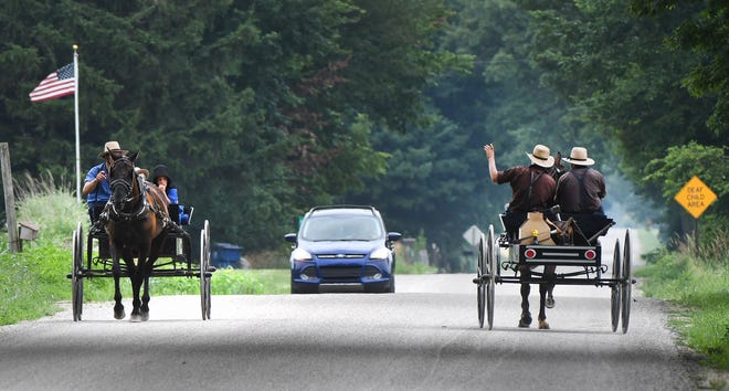 A motorist maneuvers through two horse-drawn buggies along Copeland Road in California Township. Michigan has one of the fastest-growing Amish populations in the nation.