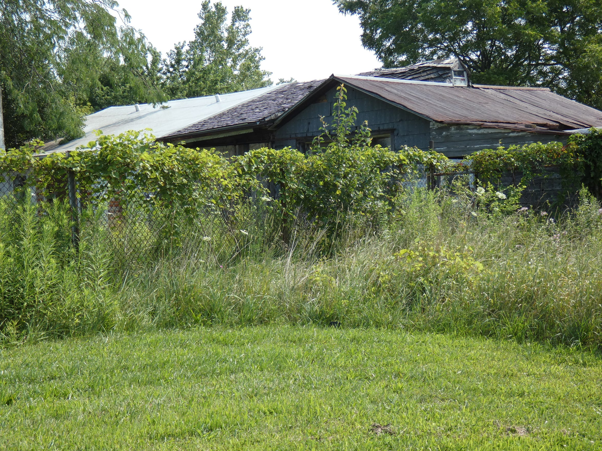 A vacant house at 275 Rodriquez St. is engulfed by overgrown grass and weeds.
