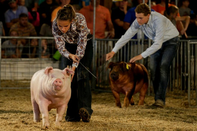 Barrows are ushered around the arena during the 4-H Grand Champion Barrow and Gilt selection judging at the 2019 Tippecanoe County Fair, Wednesday, July 24, 2019 in Lafayette. The fair continues until Saturday, July 27.