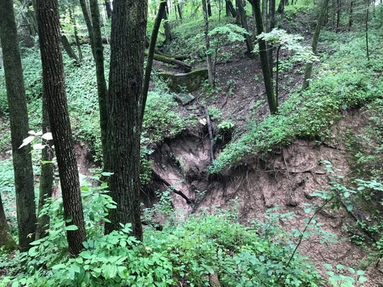 Runoff from extreme storms has destroyed the root systems of many trees in the north ravine area at Schlitz Audubon Nature Center in Bayside.