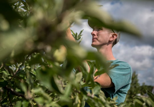 Noah Lynd walks through his family's orchard, Lynd Fruit Farm, making sure everything is good with the leaves. Lynd's is celebrating 100 years of operation at the Morse Road location.