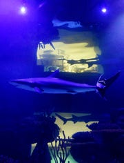 Shreveport Aquarium will host Shark Week programming, including family-friendly activities and science experiments.