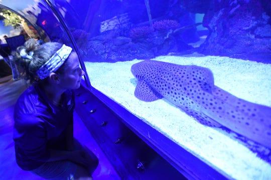 Senior aquarist Kayla Leyden and Zenon the shark at the Shreveport Aquarium.