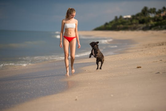 "Anastasia Baluk, 15, who lives in Weston and is vacationing in Indian River Shores, spends time with the family's French bulldog, Napoleon, on the beach Wednesday, July 24, 2019, off Beachcomber Lane. ""We've been coming for the last three years, always the same house,"" said her mother, Valeria Baluk. A big draw for the family is the dog friendliness of the beach. ""This is the only opportunity we have to bring them with the kids,"" she added, ""they really enjoy that."" Unleashed dogs are now allowed on Indian River Shores beaches daily from sunrise to 9 a.m. and from 5 p.m. to sunset, provided they have special tags issued by the Public Safety Department."