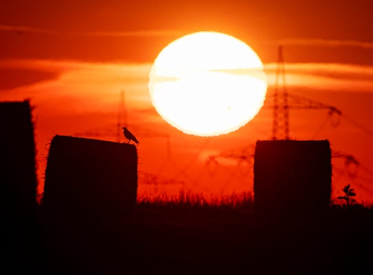 A bird sits on a straw bale on a field in Frankfurt, Germany, as the sun rises on Thursday, July 25, 2019.