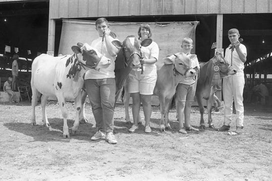 Winners of the junior fair dairy division - Jay Hayth, Sharon Clarke, John Thornton, Tom Swepston, in 1969.