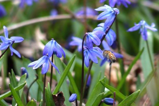 The Edsel & Eleanor Ford House is hosting Pollinator Palooza on Aug. 3.