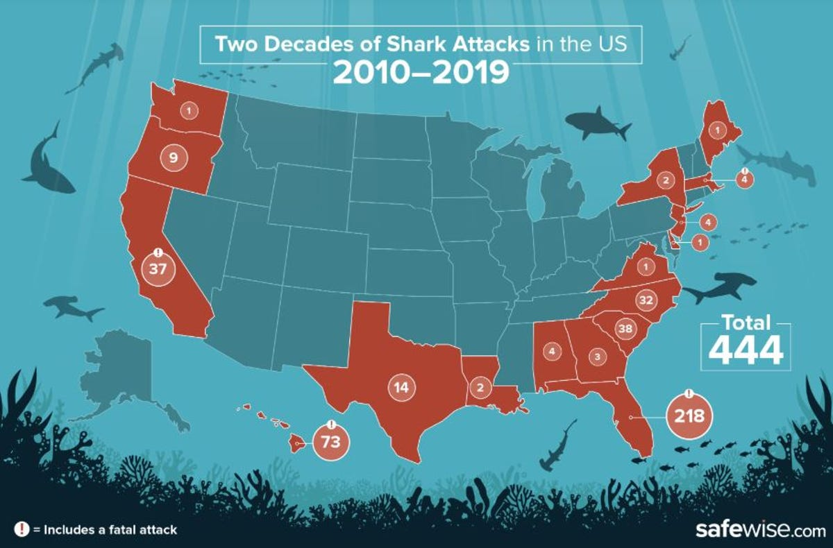 SC ranks third in shark attacks — but how worried should you be?