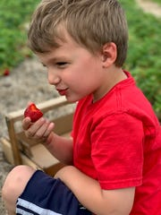 Four-year-old James Clark enjoys a strawberry at his family's farm, Mayberry Farm.