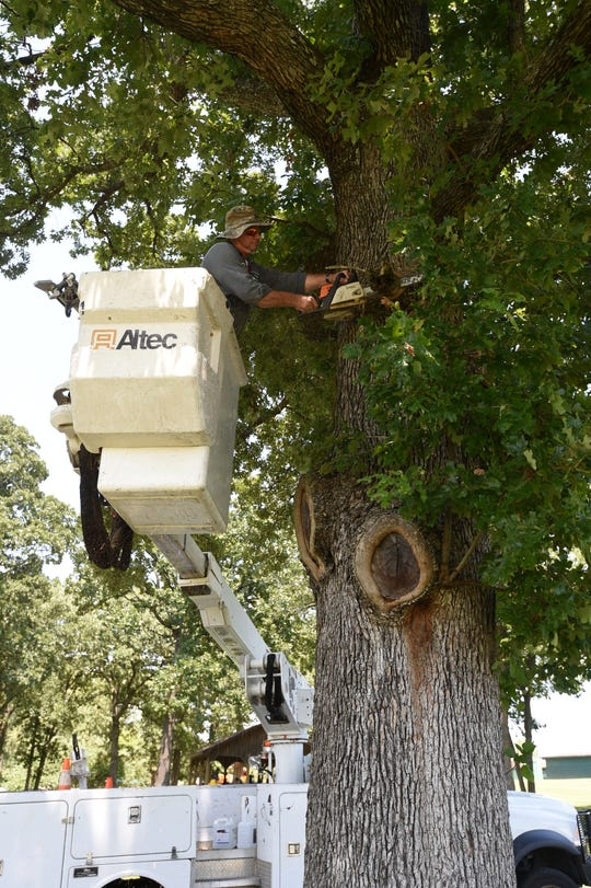 A Mountain Home Parks Department employee trims the limb of an oak tree in Cooper Park last summer. Mountain Home used to have a whole host of large, mature trees that both provided shade and spurred local business. Today, many of those trees have been sacrificed in the name of expansion and modernization.