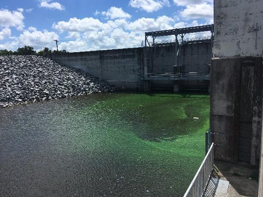 A toxic algae bloom was reported Wednesday, July 24, at a culvert on the Lake Okeechobee rim canal near Belle Glade. The bloom contained the toxin microcystin at a level deemed three times too toxic to touch be the federal Environmental Protection Agency.