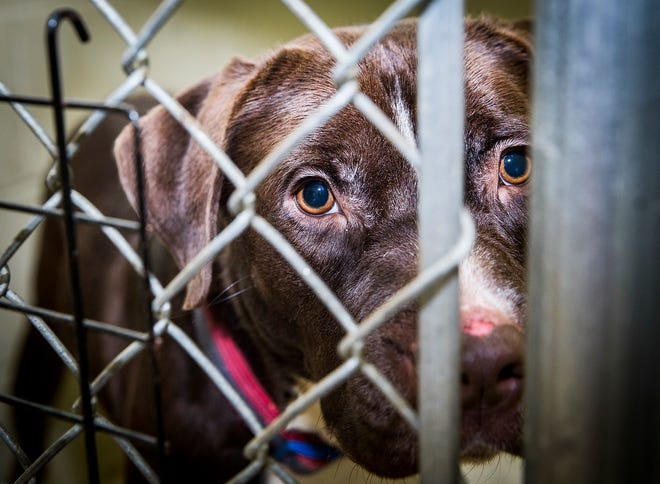 Staff at the Muncie Animal Care and Services facility are struggling to keep up with the needs of hundreds of animals as adoptions have slowed in recent weeks according to director Melissa Blair.