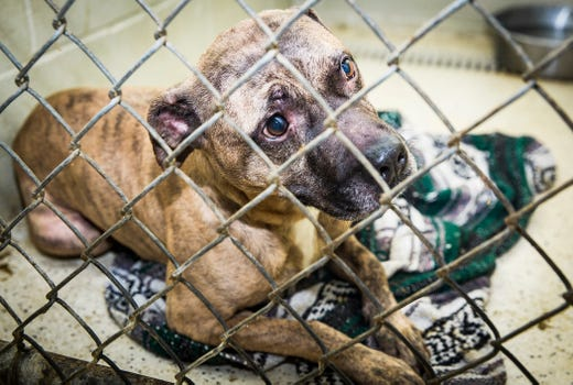 Animal shelter to host (rescheduled) 24-hour adoption event