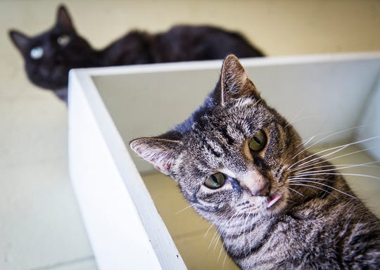 Pets at Muncie's Animal Shelter wait for adoption in July. The shelter is in constant need of donations.